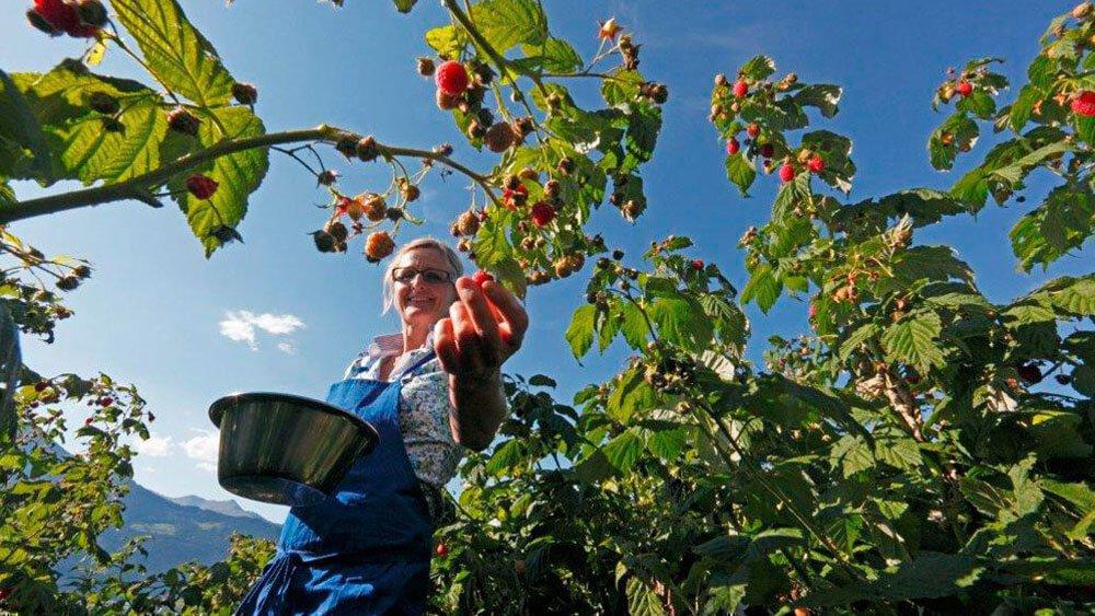 Frötscherhof Mellaun - Biologische Produkte direkt vom Bauernhof