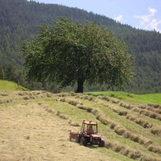 Impressions of the farms in Bressanone - Farm holidays and apartments in South Tyrol 23