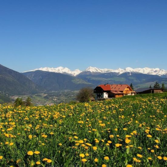 Impressions of the farms in Bressanone - Farm holidays and apartments in South Tyrol 24