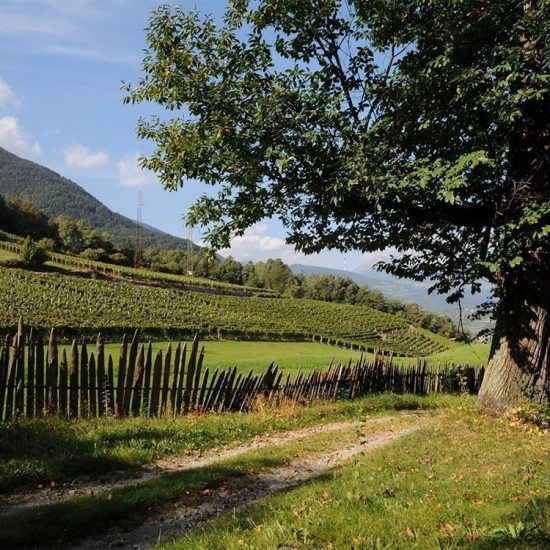 Impressions of the farms in Bressanone - Farm holidays and apartments in South Tyrol 29