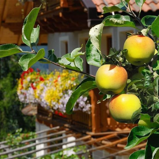 Impressions of the farms in Bressanone - Farm holidays and apartments in South Tyrol 15