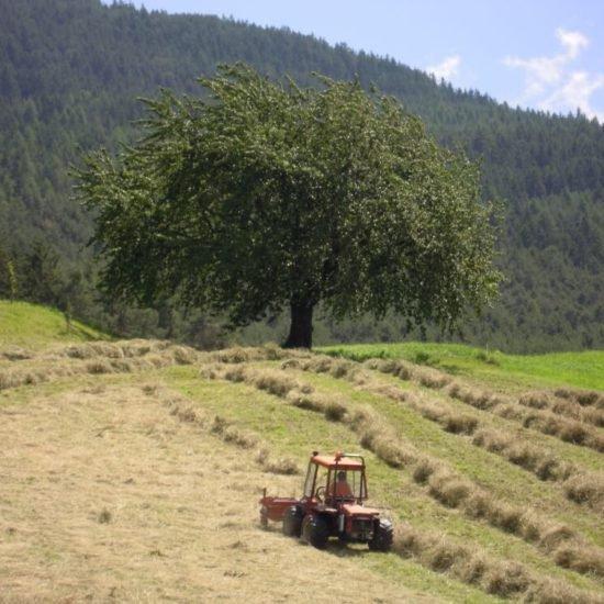 staudacherhof-bressanone-alto-adige-estate-01