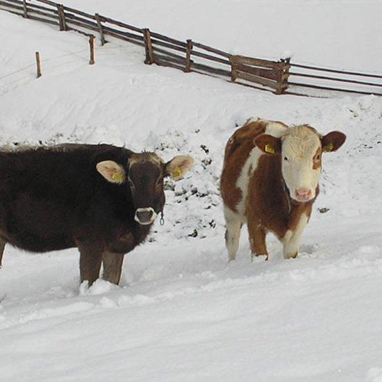 staudacherhof-bressanone-alto-adige-inverno-05