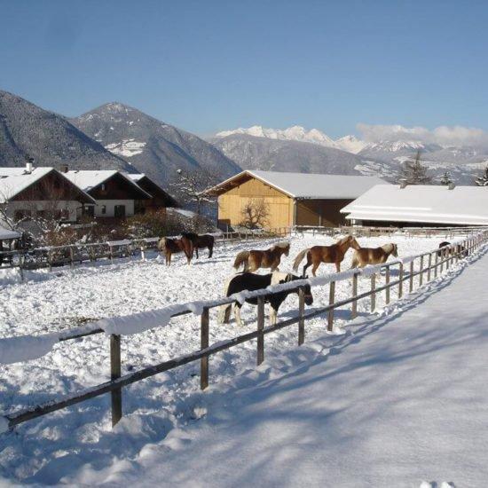 Widmannhof-inverno-alto-adige-04