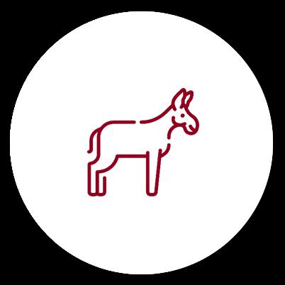 Equitazione con pony/asino