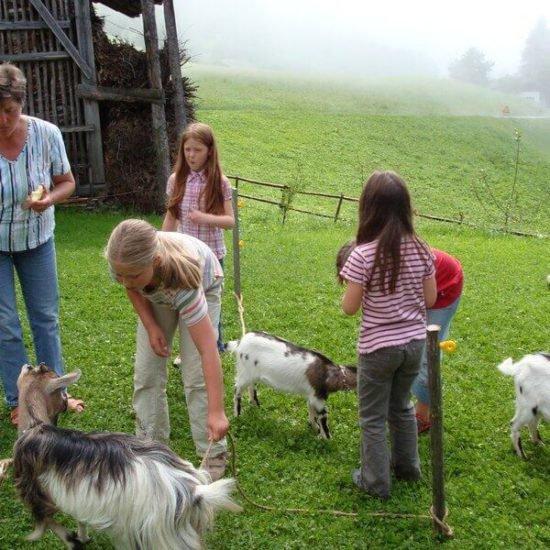 Impressionen vom Schangererhof im Sommer