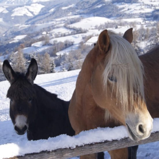 sedlhof-klerant-vacanze-inverno-alto-adige-07