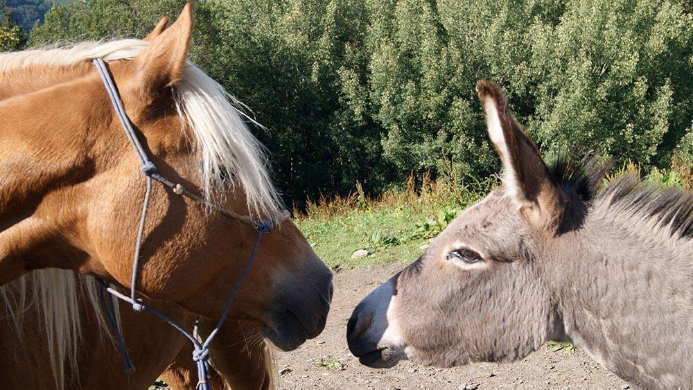Sedlhof Klerant - Tiere auf dem Hof - Natururlaub Südtirol