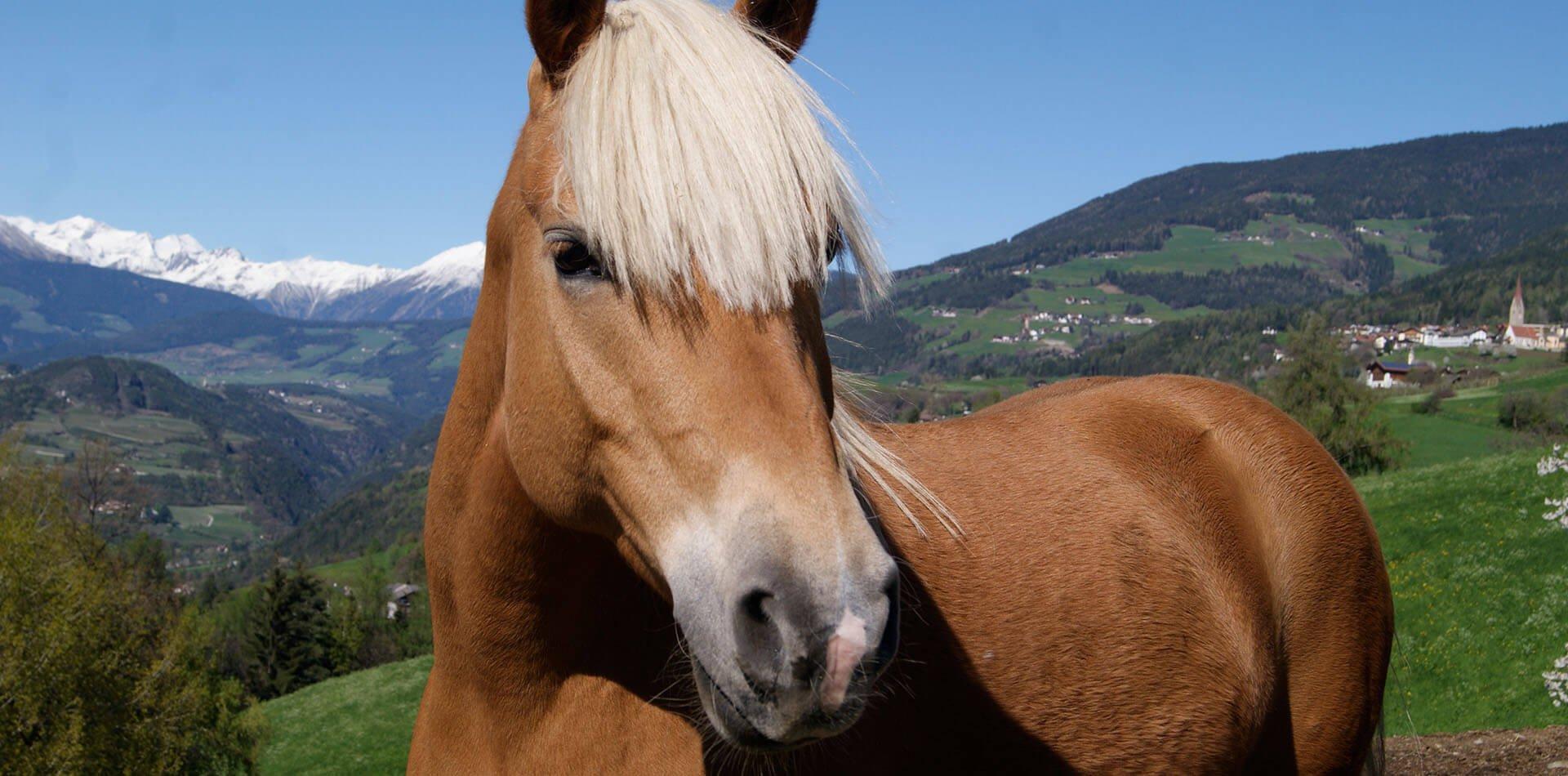 Sedlhof Klerant - Urlaub auf dem Baurnhof in Südtirol