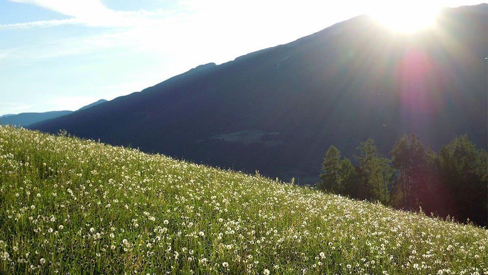 Incanto primaverile nelle Dolomiti - Staudacherhof Meluno / Alto Adige