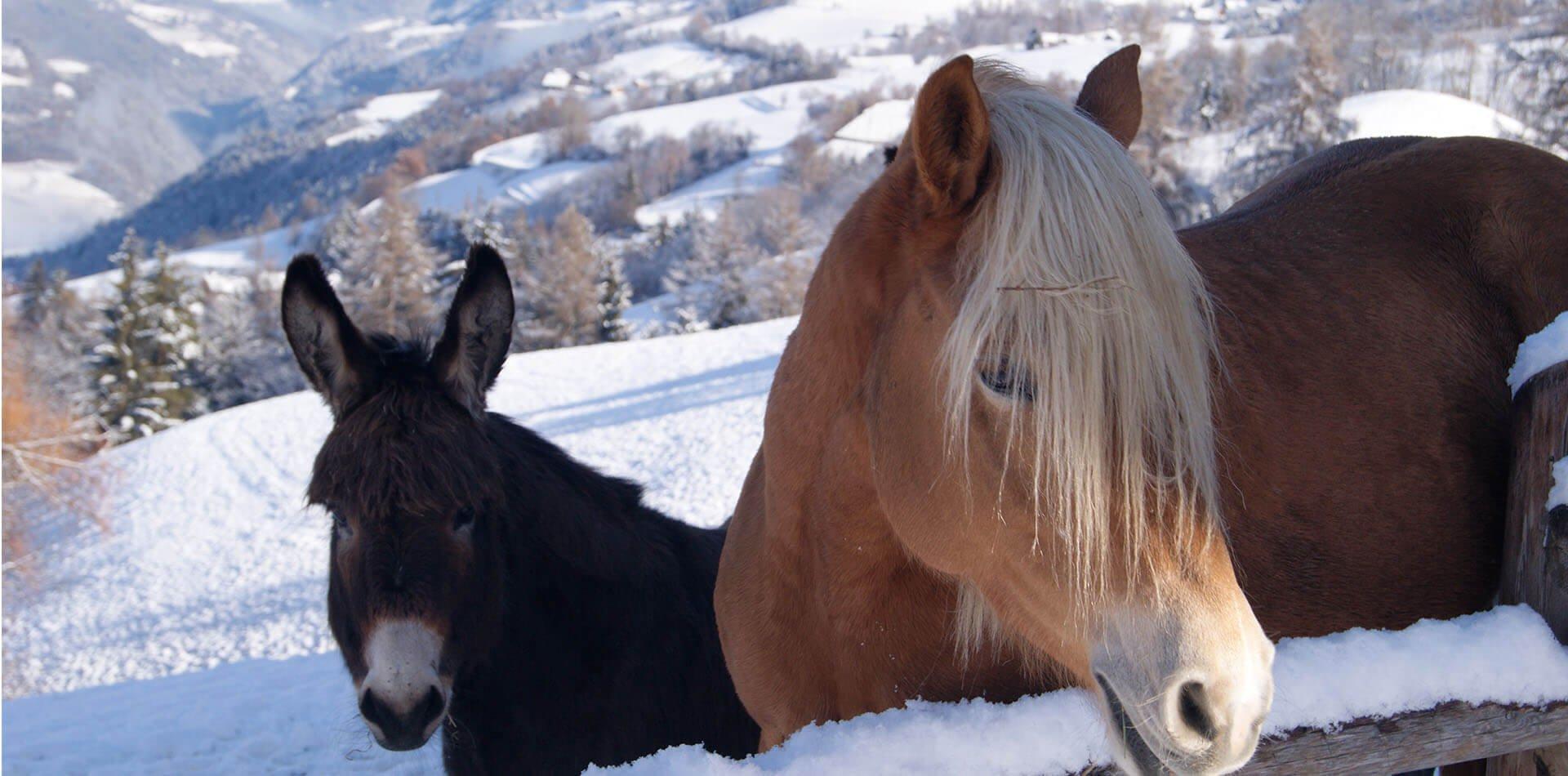 Urlaub auf dem Bauernhof Brixen | Winterurlaub am Bauernhof