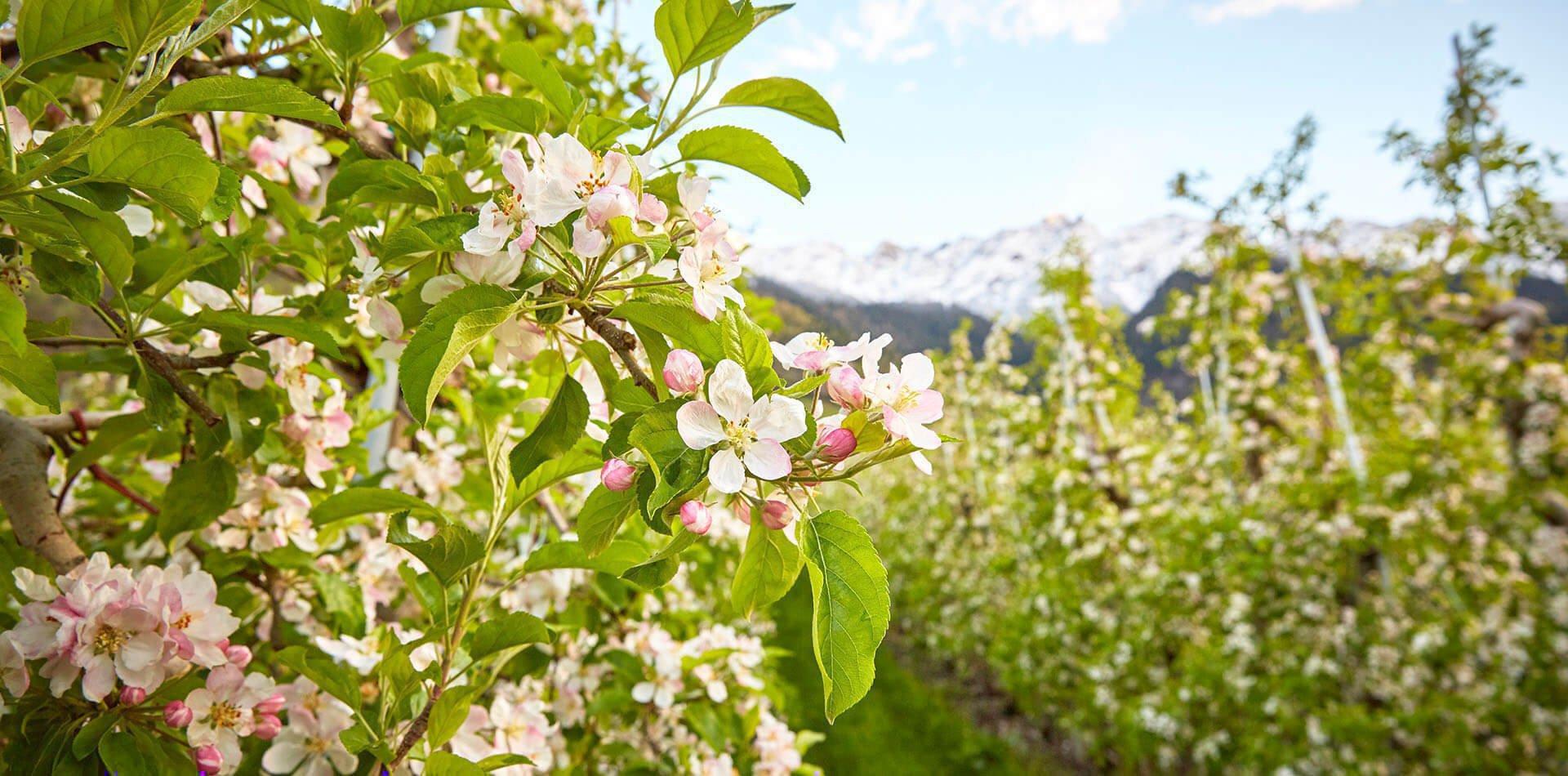 Frühlingsurlaub auf dem Bauernhof im Eisacktal