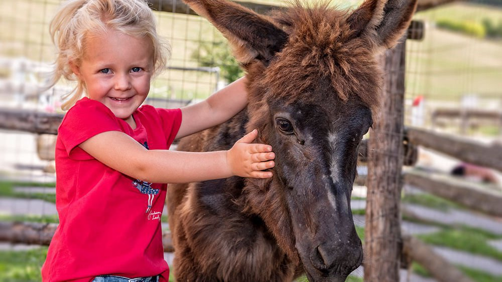 widmannhof-bressanone-fattoria-equestre-biologica-alto-adige-07