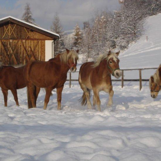 Widmannhof-inverno-alto-adige-10