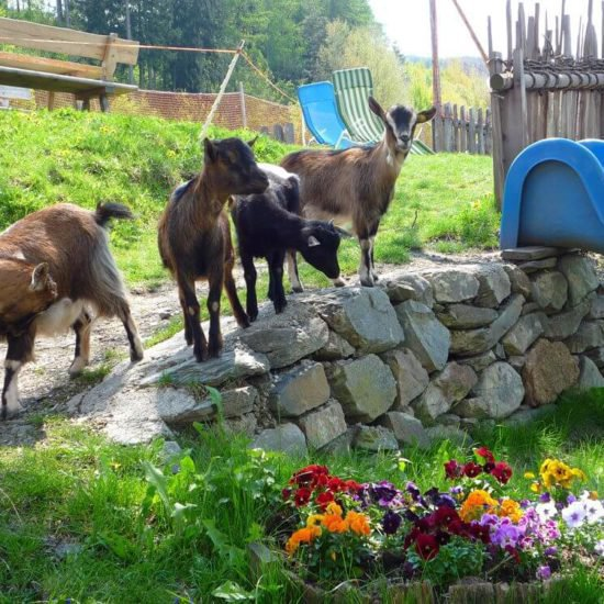 froetscherhof-meluno-vacanze-estate-bressanone-alto-adige-10
